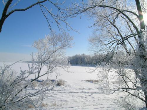 俄罗斯的白桦茸