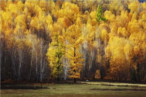 白桦茸在俄罗斯的地方