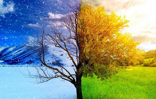 桦树茸代理加盟关注养生方法