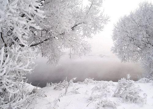 俄罗斯环境造就的白桦茸