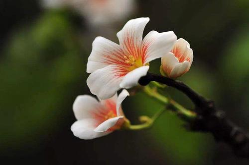 桦树茸关注蔬菜营养问题